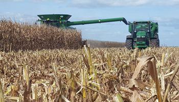 La cosecha de maíz en Córdoba supera en un 66% al promedio de los últimos 10 años