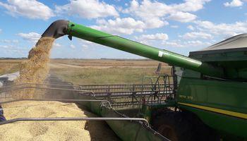 Fuerte incremento en las ventas de soja durante la última semana