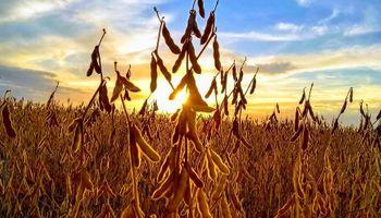 Fuerte suba de la soja en el mercado local