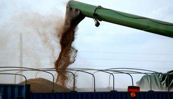 Avance récord de la cosecha: se levantaron 1,6 millones de hectáreas en una semana