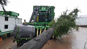Lluvias causan estragos sobre el NEA: cuántas hectáreas se encuentran en riesgo
