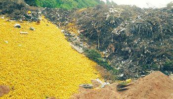 Tucumán: toneladas de limones terminan en basurales por exceso de producción