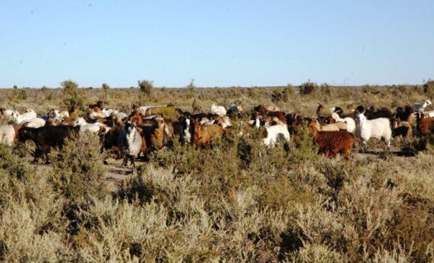 Avances de este estudio serán presentados en el 10.° Congreso Argentino de Agroinformática.