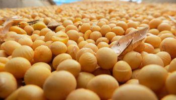 Declaración jurada sobre semilla de soja: quiénes, cómo y cuándo