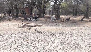 Declaran emergencia agropecuaria en Salta por la importante sequía