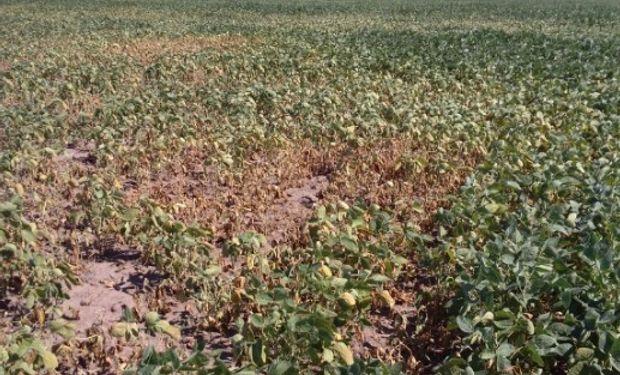 Lluvias registradas durante los días previos sólo brindaron alivio momentáneo en sectores puntuales del centro y sur de la región agrícola.