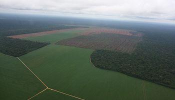 Tecnología para poder combatir la deforestación