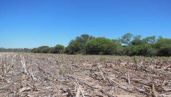 Santiago del Estero lidera el ranking mundial de desmontes