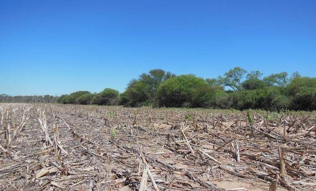 Récord poco feliz: la mayor tasa de desaparición de bosques nativos de todo el mundo.