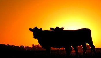 """Delito rural: entidades agroindustriales calificaron el proyecto de Massa como """"un claro avance institucional"""""""