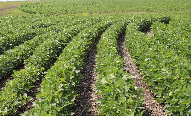 El precio de la soja revirtió la tendencia: cuánto se pagó en Rosario