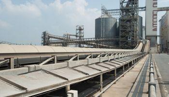 Fuerte repunte del aceite de soja contagió al poroto en CBOT