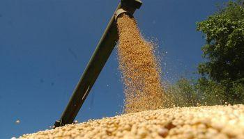 Demanda china de soja se desacelera este año