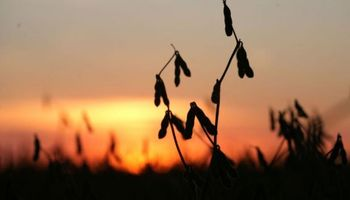 Productores uruguayos siguen sin vender soja previo a cosecha
