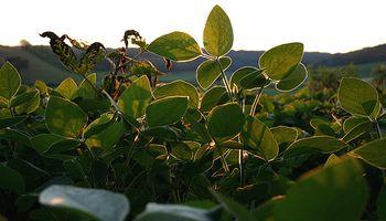 Chicago: la demanda volvió a darle una mano a la soja