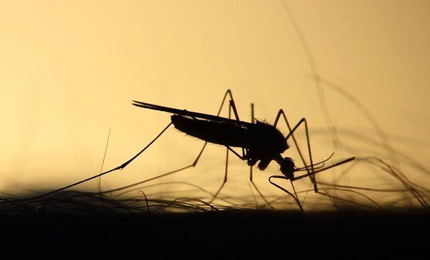 La epidemia silenciosa: en solo un mes se detectaron más de 12 mil casos de dengue