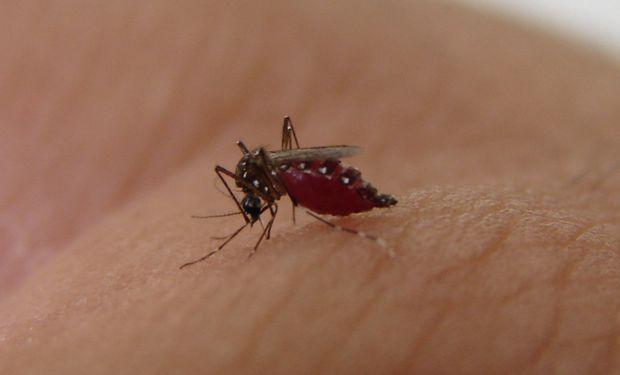 Dengue: preguntas y respuestas luego de superar los 41.000 infectados en Argentina