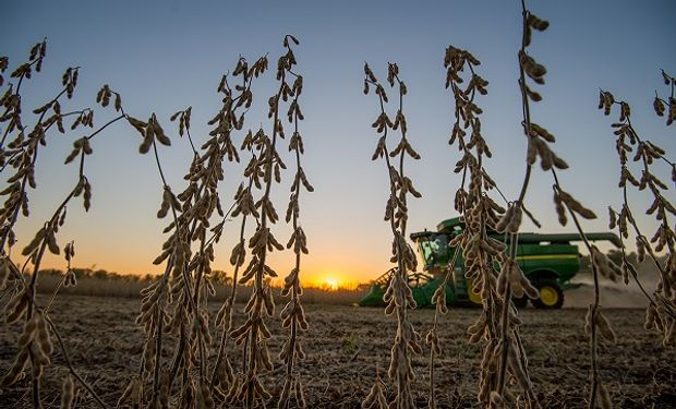 Soja y maíz: las razones detrás del derrumbe de precios