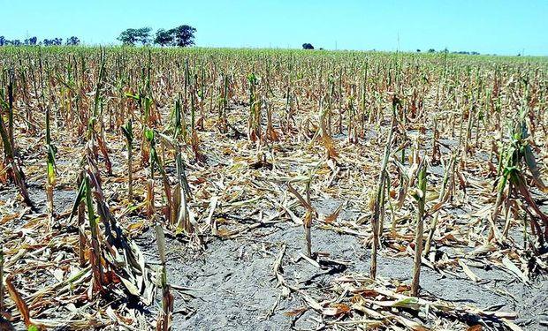 La sequía también afecta al norte de Santa Fe