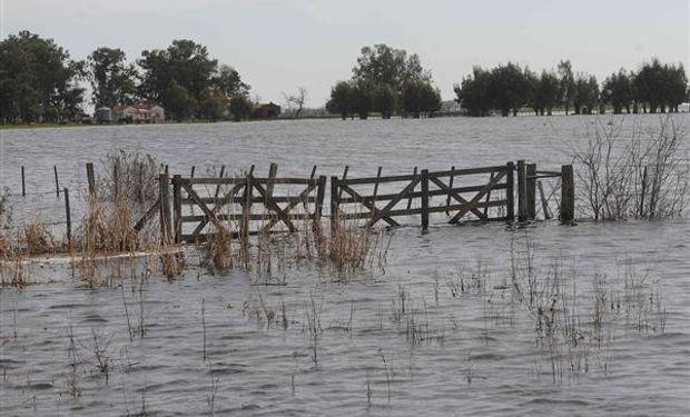 En la zona de Bengolea buscan trasladar las vacas en medio del agua.