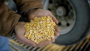 El maíz fue el gran protagonista del mercado local