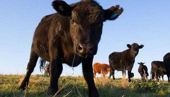 Intensifican controles a la importación de rumiantes tras los casos de vaca loca
