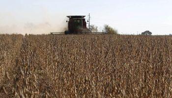 Por qué caería la cosecha de soja pese a la suba de 200 mil hectáreas en el área