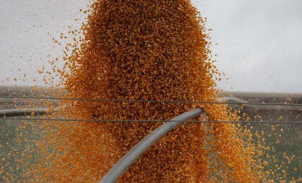 El maíz busca recuperarse tras tocas un mínimo de tres meses.