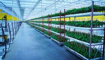 Boom de granjas verticales: en 2020 se invirtieron US$ 500 millones y anticipan fuerte apuesta de fondos