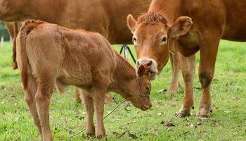 """Destacan la necesidad de un """"bono vaca"""" para impulsar la ganadería a nivel nacional"""