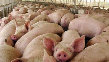 Exportadores de cerdos se reunieron con el Gobierno por nuevos mercados
