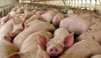 Arroz, miel, maní y porcinos: las principales economías regionales que mostraron crecimiento