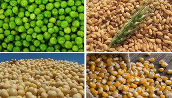 La importancia de diversificar marcas y tipos de cultivos