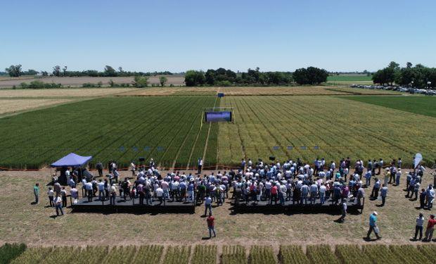 El trigo tolerante a sequía es desarrollo argentino que todavía no se encuentra aprobado en países compradores del cereal.