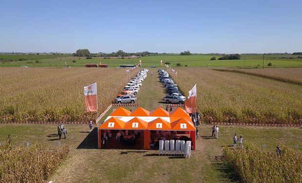 KWS presentó las parcelas de híbridos para cosecha de grano.