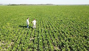 Malezas: cómo evitar el uso sostenido de herbicidas PPO's en la era del Yuyo colorado