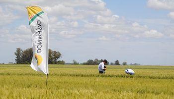 Trigo DONMARIO: qué novedades presenta el semillero para la campaña 2021/22