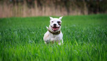 Día del Perro: cuánto daño les podemos hacer si los tratamos como humanos