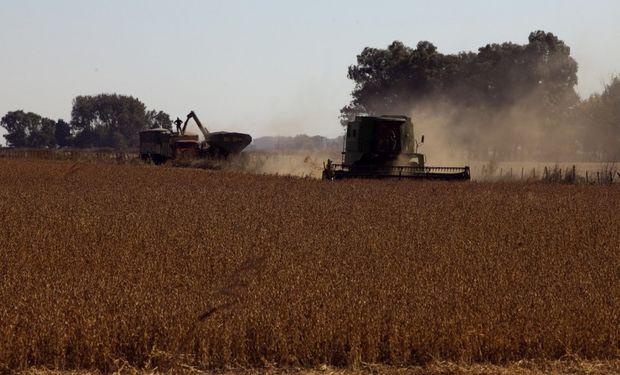 El precio efectivo de la soja para el productor argentino es de US$ 126