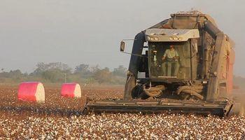 Con desarrollo público privado, se presentó la cosechadora de algodón autopropulsada fabricada en Argentina