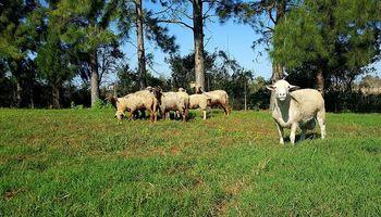 La carne ovina busca incorporarse a la dieta de los argentinos