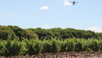 Viticultura de precisión: dron monitorea cultivos