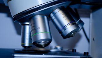 Edición génica: el potencial de manipular el ADN de la papa, la soja y las vacas