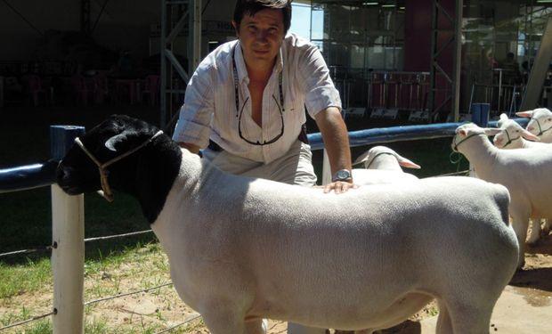 La Dorper es la raza carnicera del futuro para Argentina. Foto: Expoagro.