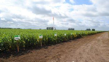 Lanzan ocho nuevas variedades de soja: la empresa que invierte en un contexto negativo para el negocio de semillas