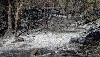 Incendios en Córdoba: la provincia analiza daños y asiste a los productores afectados
