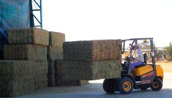 Qatar recibió la primera carga de alfalfa enviada desde San Luis y planean otro envío de 15 mil toneladas