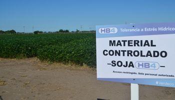 La soja tolerante a sequía mostró sus fortalezas