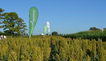 Nuseed mostró sus semillas de alta performance