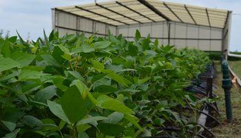 Syngenta apuesta a mejorar el manejo ante estrés hídrico en soja